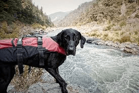 Selecting canine safety clothes