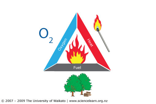 Fuel's Effect on Fire Behavior