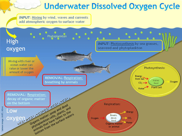 a review of the determination of the differences in dissolved oxygen levels Difference in dissolved oxygen (do) levels as measured by the traditional hach®  review of literature  the way you determine the amount of dissolved oxygen in .