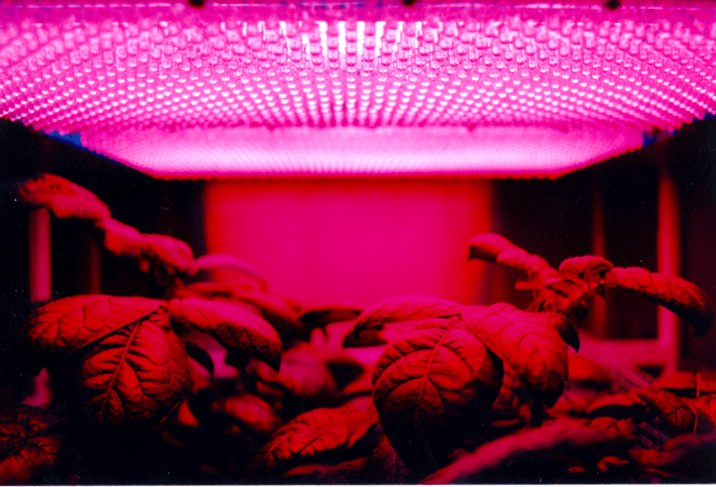 Research and commercial greenhouses information engineering360 selecting greenhouse grow lights mozeypictures Image collections
