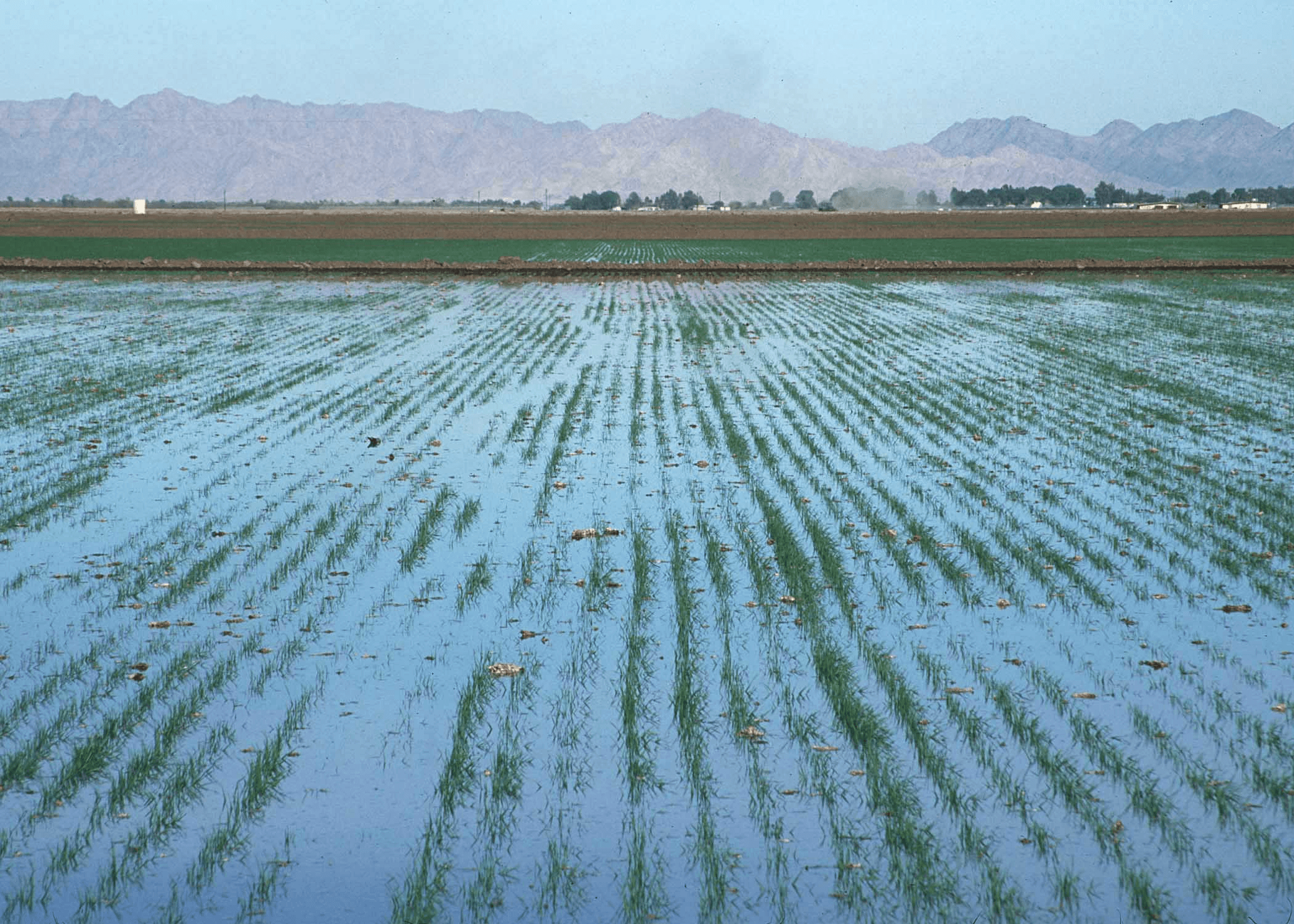 Selecting surface irrigation methods
