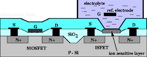 Schematic Ion-sensitive Field Effect Transistor (ISFET) Diagram