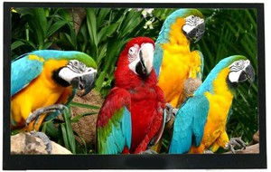 "7.0"" TFT Display - Superior Viewing-Image"