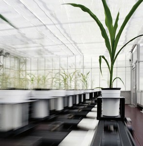 Controlled Environment High Precision Phenotyping-Image