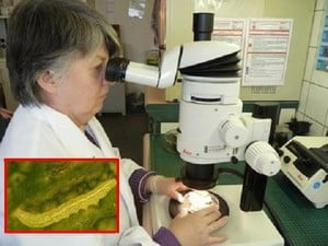 Plant & Food Inspection Systems-Image