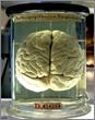 Neural Prosthetics from Nanotubes?