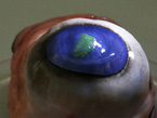 Flexible, Stick-On Tags Attach Laser Beams to Eyeballs